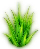 Aloe Vera  LexiYoga